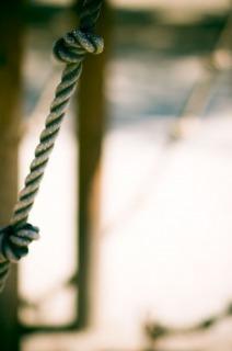 怨恨と首吊り自殺・曰く付きの木